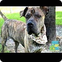 Adopt A Pet :: Jaimie - Miami, FL