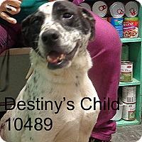 Adopt A Pet :: Destiny's Child - baltimore, MD