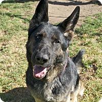 Adopt A Pet :: Rosie - Santa Barbara, CA
