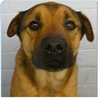 Adopt A Pet :: Koma - Springdale, AR