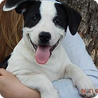 Adopt A Pet :: Orion (18 lb) New Pics & Video - SUSSEX, NJ
