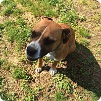 Adopt A Pet :: Zipper - Hohenwald, TN