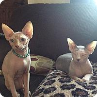 Adopt A Pet :: Bentley & Rocco - Long Beach, CA
