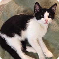 Adopt A Pet :: Zipurr - North Highlands, CA