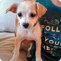 Adopt A Pet :: Gill - San Antonio, TX