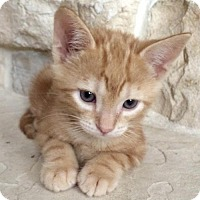 Adopt A Pet :: Bob - West Palm Beach, FL