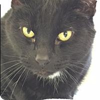 Adopt A Pet :: Jafar - Divide, CO