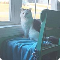 Adopt A Pet :: Tommie - Nashville, TN