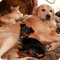 Adopt A Pet :: Cooper - Winchester, TN