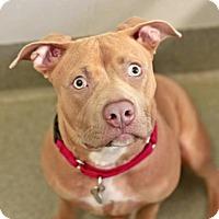 Adopt A Pet :: Yo-Yo - Kettering, OH