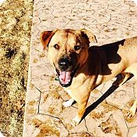 Adopt A Pet :: Rosebud - Oakland, MI