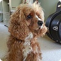 Adopt A Pet :: OLIVER - Tacoma, WA