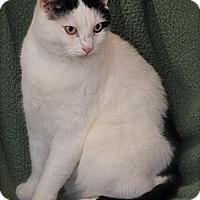 Adopt A Pet :: Lenny - Trevose, PA