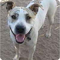 Adopt A Pet :: Jericho - Golden Valley, AZ