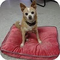 Adopt A Pet :: BUTTER - Valley Village, CA
