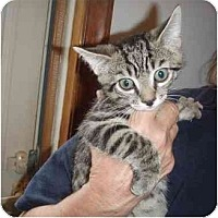 Adopt A Pet :: Sampson - New Egypt, NJ