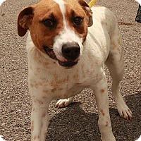 Adopt A Pet :: Bernard ($200 adoption fee) - Brattleboro, VT