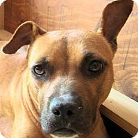 Adopt A Pet :: Lia - Wimberley, TX
