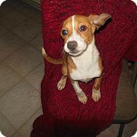 Adopt A Pet :: Merry - Cincinnati, OH