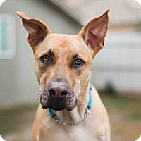 Adopt A Pet :: Cole - Santa Monica, CA