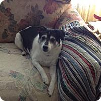 Adopt A Pet :: Izzy - Cedar Rapids, IA
