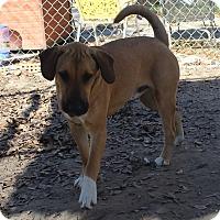 Adopt A Pet :: Youngblood - Daleville, AL