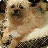 Adopt A Pet :: Biscuit - Sinking Spring, PA