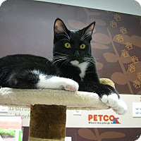 Adopt A Pet :: JAX THE TUX - Brea, CA