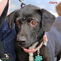 Adopt A Pet :: Clare - Alpharetta, GA