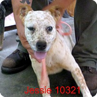 Adopt A Pet :: Jessie - baltimore, MD