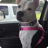 Adopt A Pet :: Mushy - Lake Charles, LA