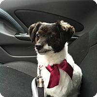 Adopt A Pet :: Lucy - Schaumburg, IL