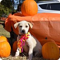Adopt A Pet :: Haven - Charlemont, MA