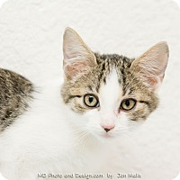 Adopt A Pet :: Smokey - Fountain Hills, AZ