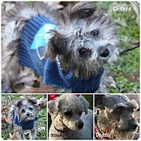 Adopt A Pet :: Charlie - Cranford, NJ