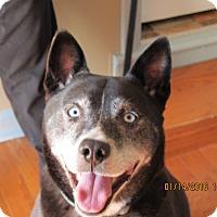 Adopt A Pet :: Buddy - Queenstown, MD