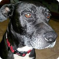 Adopt A Pet :: Sasha - Cincinnati, OH
