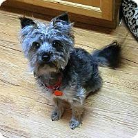Adopt A Pet :: Carter - Whiting, NJ