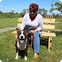 Adopt A Pet :: Daisa - Elyria, OH