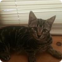 Adopt A Pet :: JILL - Maybrook, NY