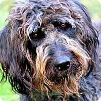 Adopt A Pet :: NORA(OUR