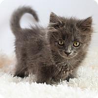 Adopt A Pet :: Lexi - Xenia, OH