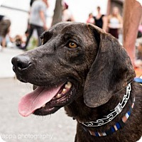 Adopt A Pet :: Dominic West - Brooklyn, NY