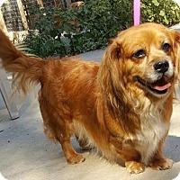 Adopt A Pet :: Alvin - Baileyton, AL