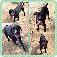 Adopt A Pet :: Ace - Garber, OK
