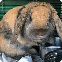 Adopt A Pet :: Sherwin - Holbrook, NY