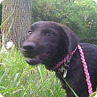 Adopt A Pet :: Hunter - Silver Lake, WI