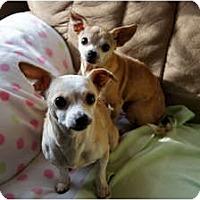 Adopt A Pet :: Gracie&Maria - Xenia, OH