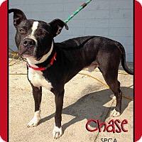 Adopt A Pet :: Chase - Chatham, VA