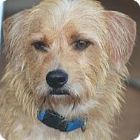 Adopt A Pet :: London - Norwalk, CT